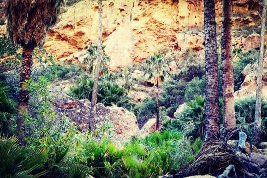 Un oasis en el desierto de Sonora